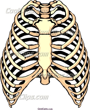 Skeleton Ribs Clipart.