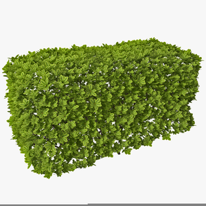 Bushes And Shrubs Clipart.