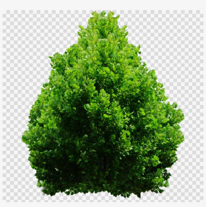 Download Shrub Png Clipart Shrub Clip Art Tree Grass.