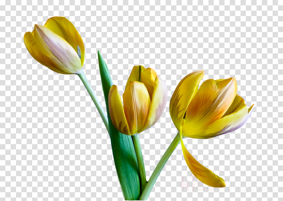 spring flower spring floral flowers clipart.