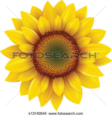 Clipart of sunflower out line vector k14656444.