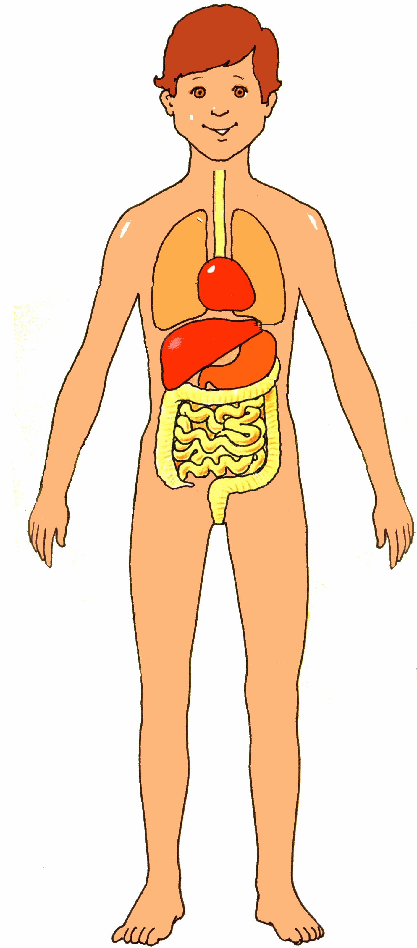 Body clipart human body, Body human body Transparent FREE.