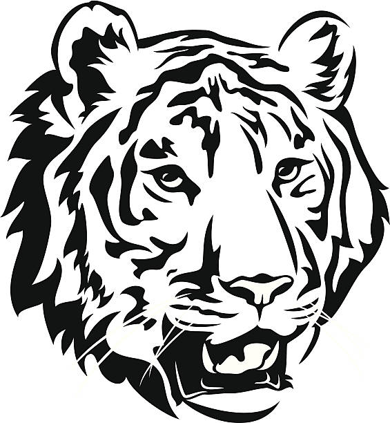 Best Black And White Tiger Illustrations, Royalty.