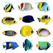 Tropical fish Illustrations and Clip Art. 3,023 tropical fish.