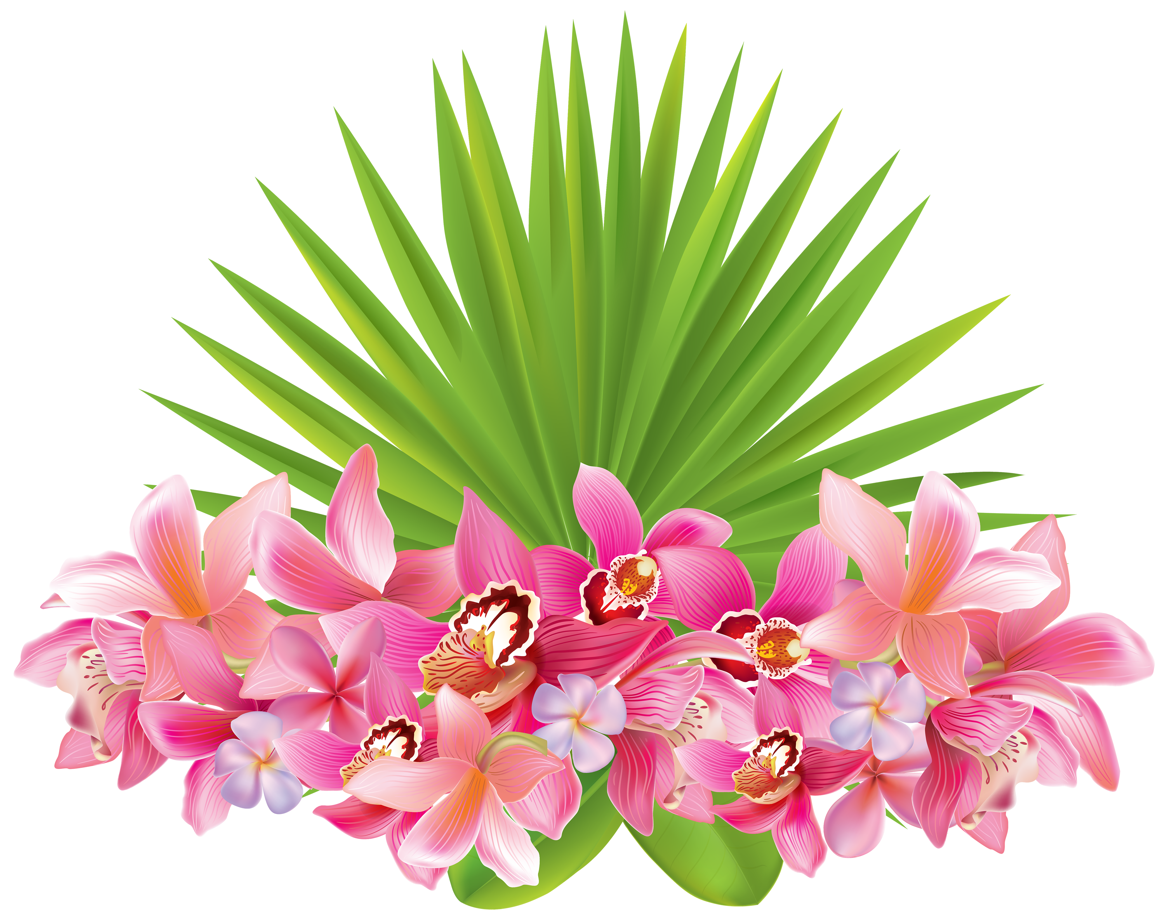 Tropical Flowers PNG Clipart Image.