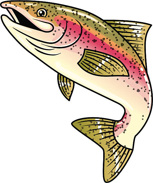 Rainbow Trout Clipart.