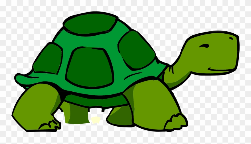 3d Clipart Turtle.