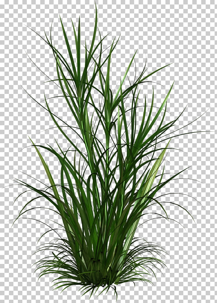 Born from Weeds & Rats , shrub plan PNG clipart.