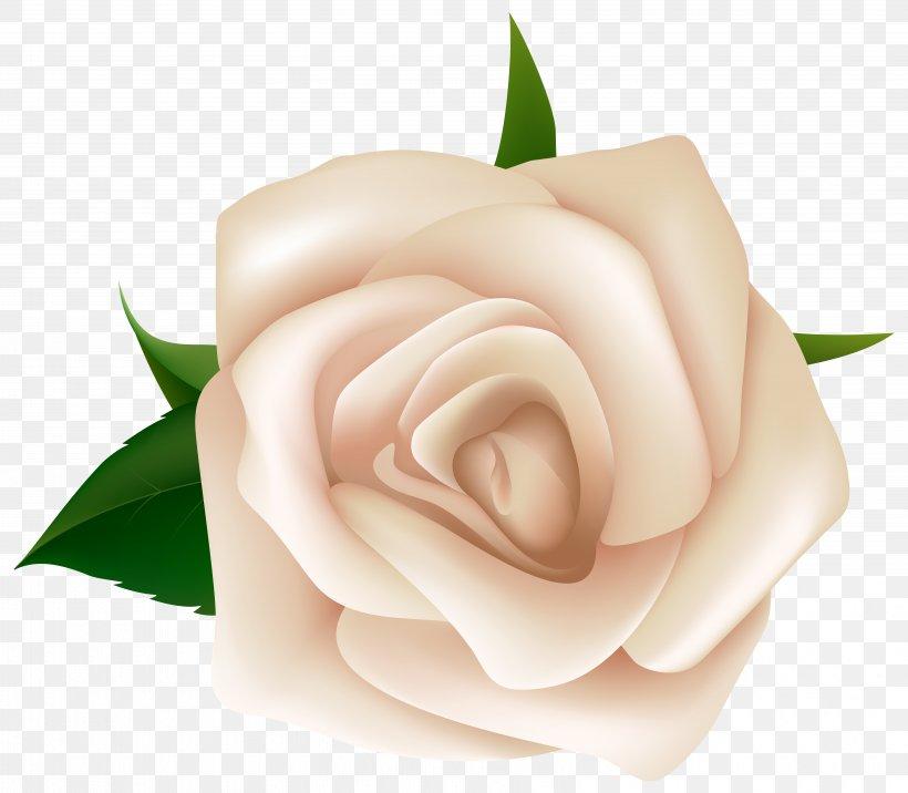Rose White Clip Art, PNG, 6415x5608px, Rose, Black Rose.