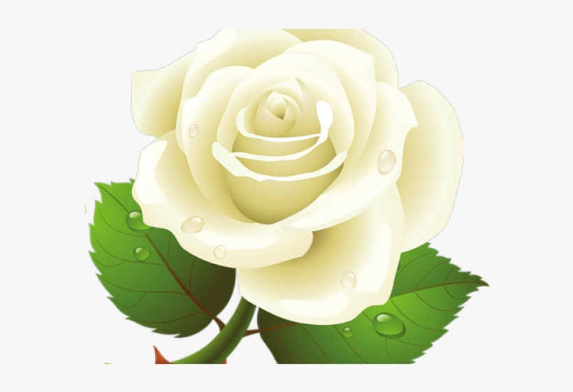 White Rose Clipart Yellow.