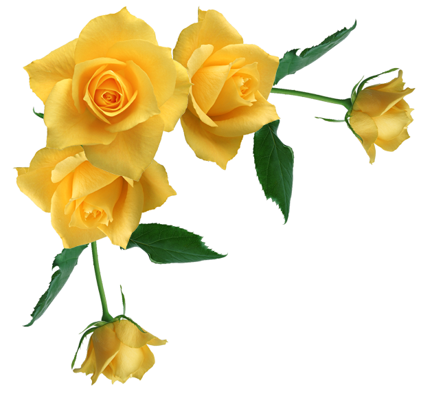 Free Yellow Rose Transparent, Download Free Clip Art, Free Clip Art.
