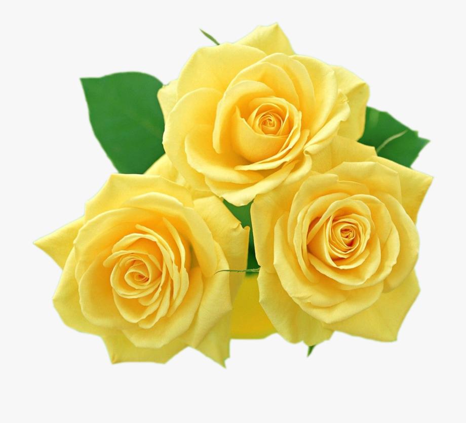 Yellow Flowers, Textiles, Flower Clipart, Clip Art,.