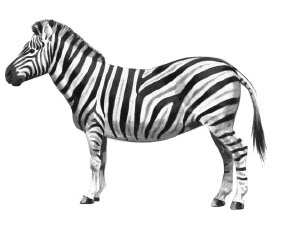 Free Zebras Clipart.