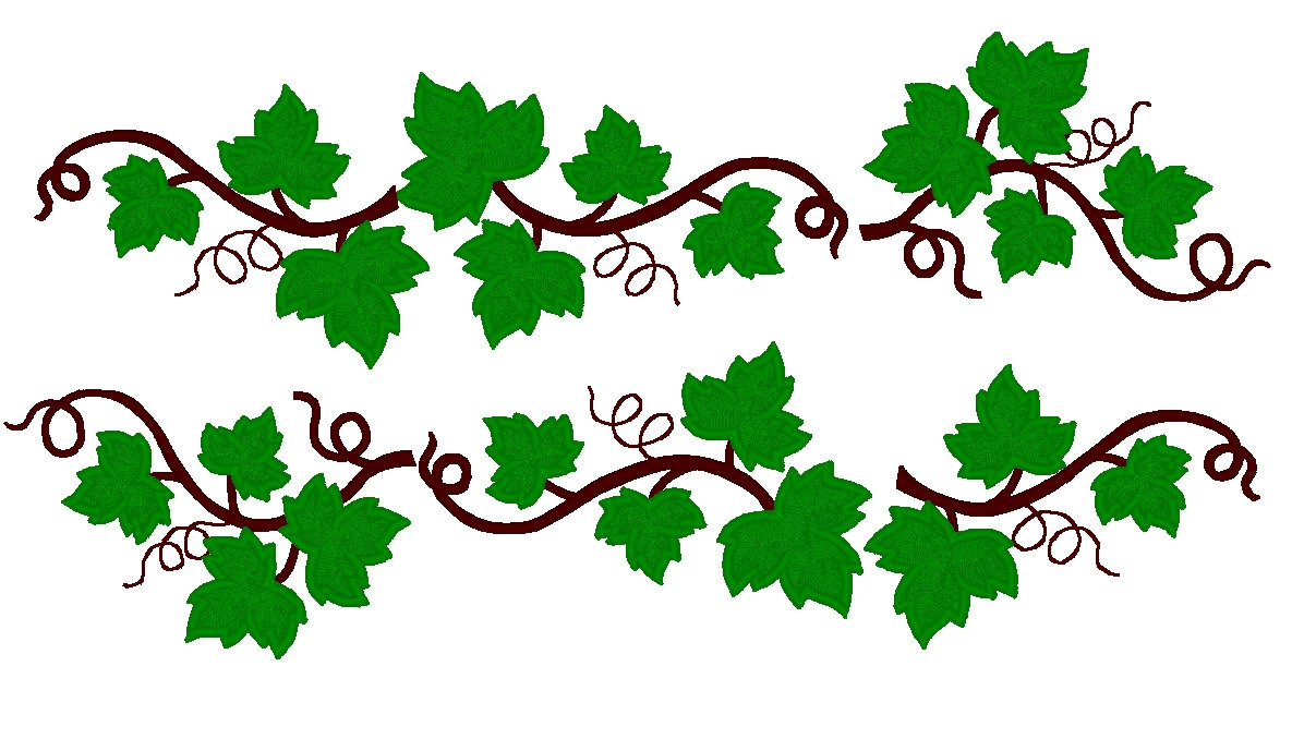 Ivy clipart vine, Ivy vine Transparent FREE for download on.
