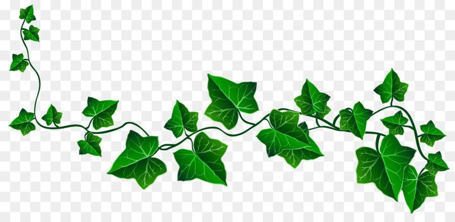 Ivy Vine Clip art.
