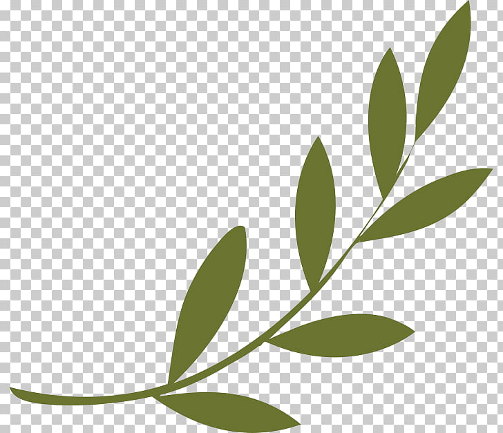 Olive branch Peace symbols Olive wreath, symbol PNG clipart.