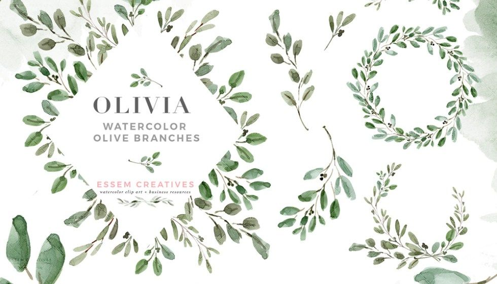 Watercolor Olive Branch Clipart, Olive Leaves Wreath, Leaf.