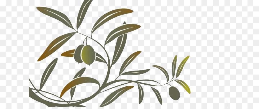 Olivenöl ClipArt Olivenzweig Mittelmeerküche.