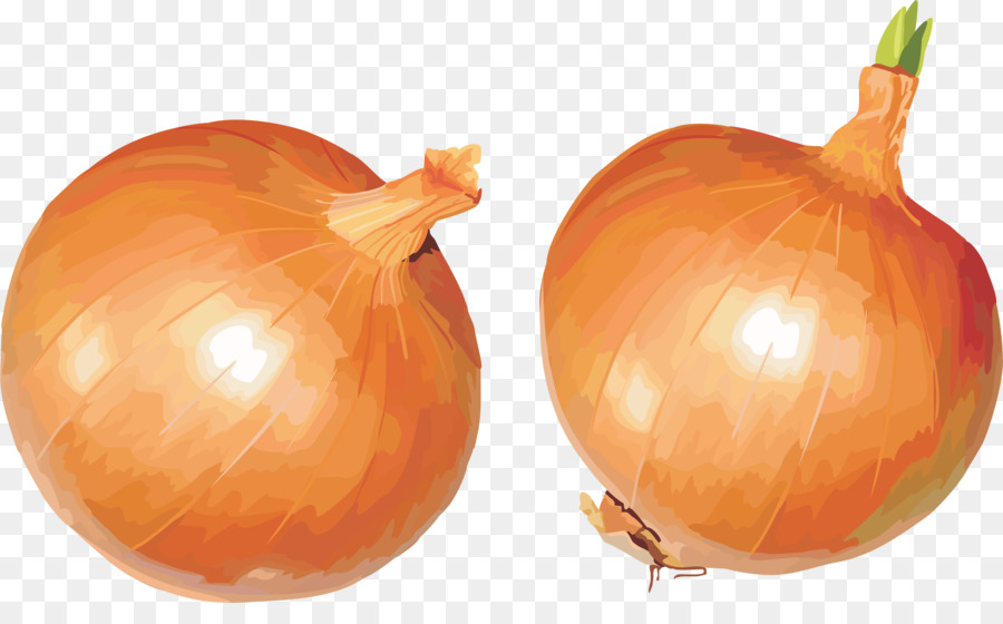 clipart onion #7