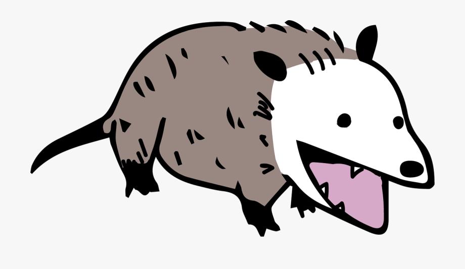 Opossum Clip Art.