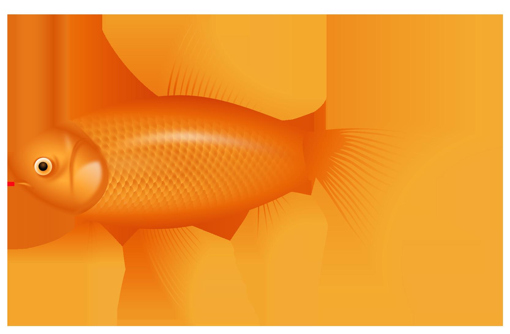 Orange Fish PNG Clipart.