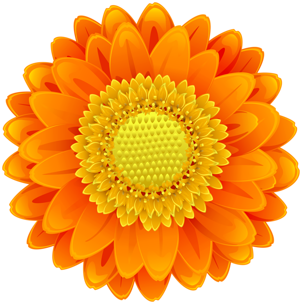 Pin about Flower clipart, Flowers and Orange flowers on colors.