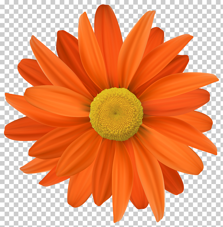 Flower, Orange Flower Transparent PNG clipart.
