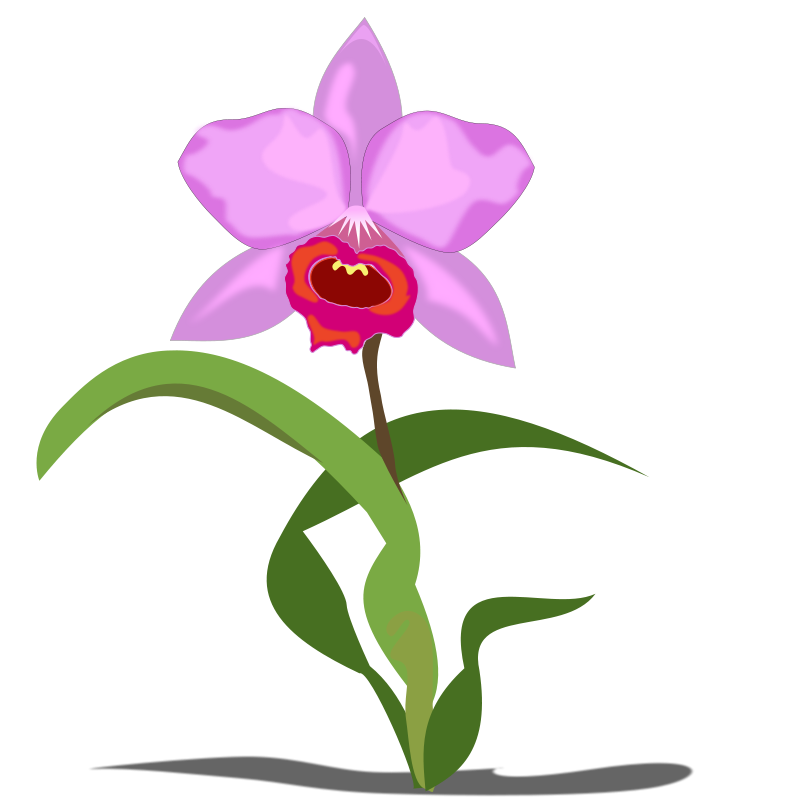 Free Orchid Cliparts, Download Free Clip Art, Free Clip Art.