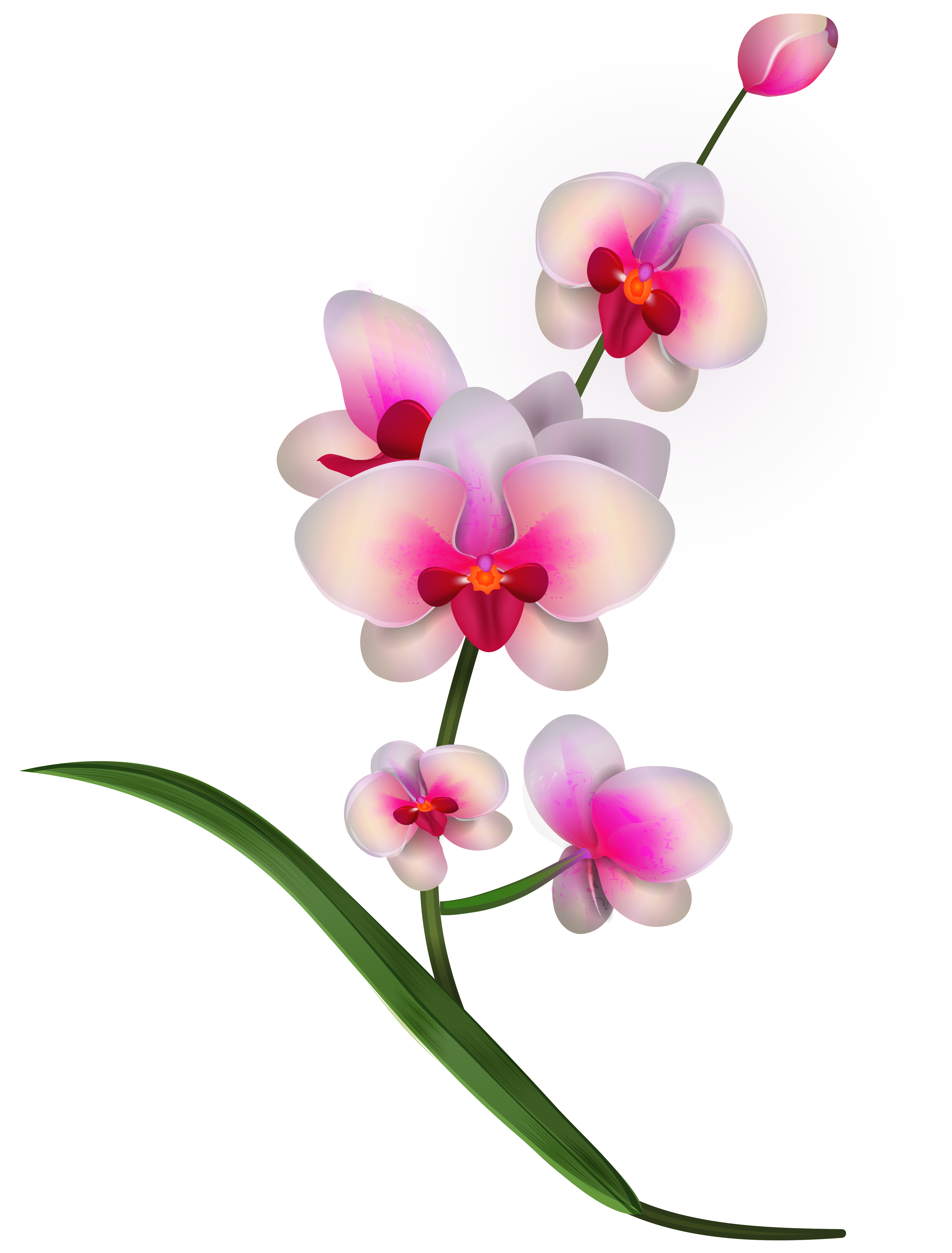 Orchid Clipart PNG Image.