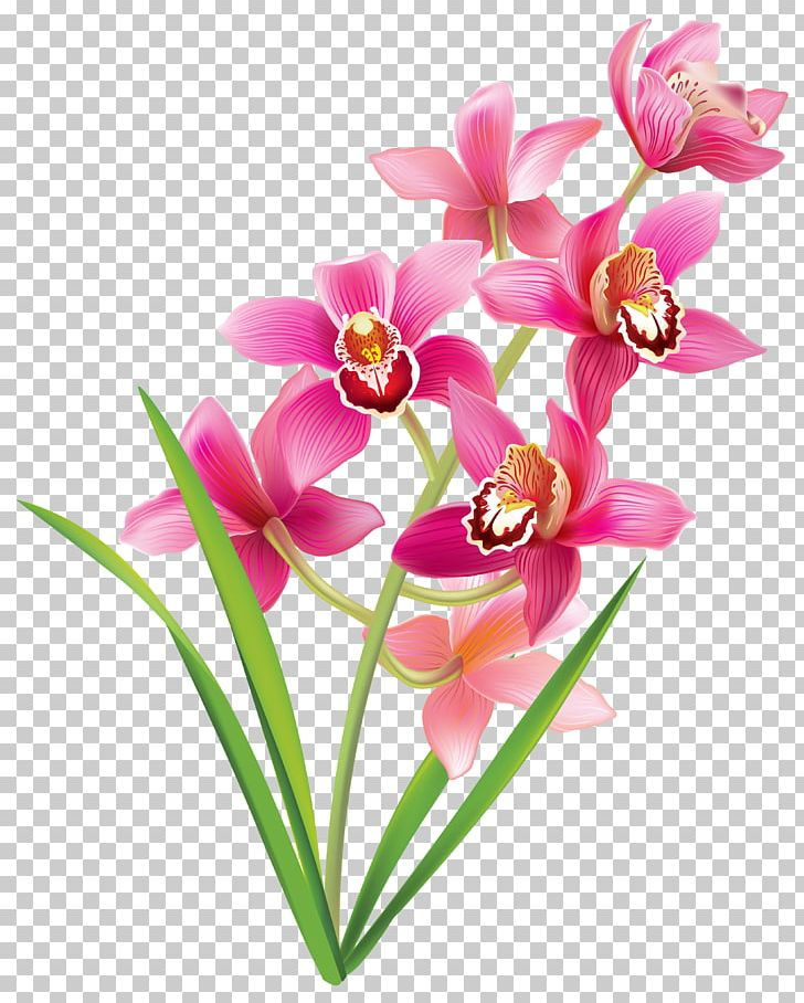 Orchids PNG, Clipart, Cattleya Orchids, Clipart, Clip Art.