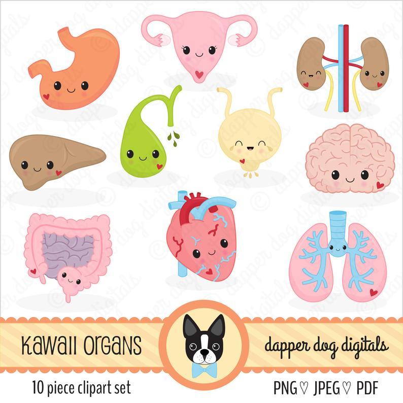 Kawaii Organs Clipart Pack.