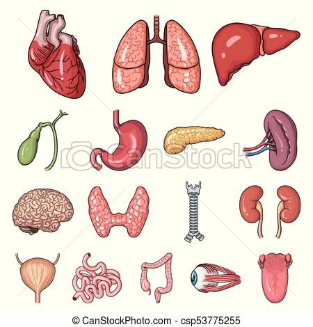 Human organs cartoon icons in set collection for design. Anatomy and  internal organs vector symbol stock web illustration..