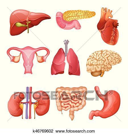 Clipart organs 2 » Clipart Portal.
