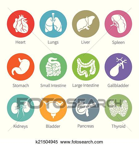 Vector icon set of human internal organs in flat style Clipart.