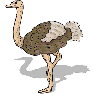 Ostrich 12 clipart, cliparts of Ostrich 12 free download (wmf, eps.