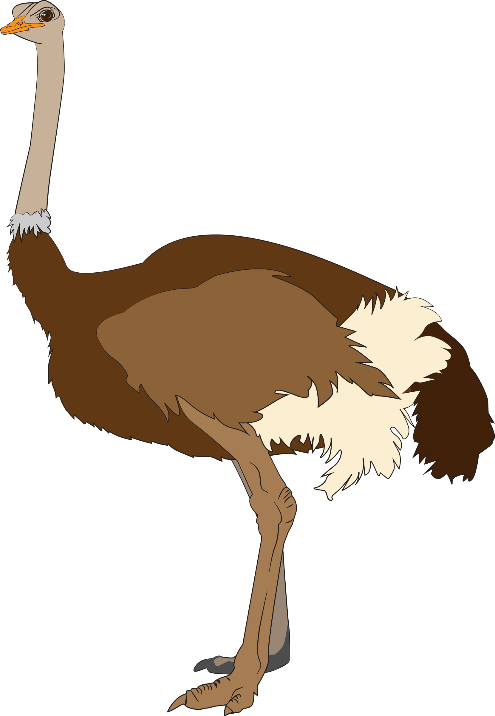 Ostrich Vector Clipart image.