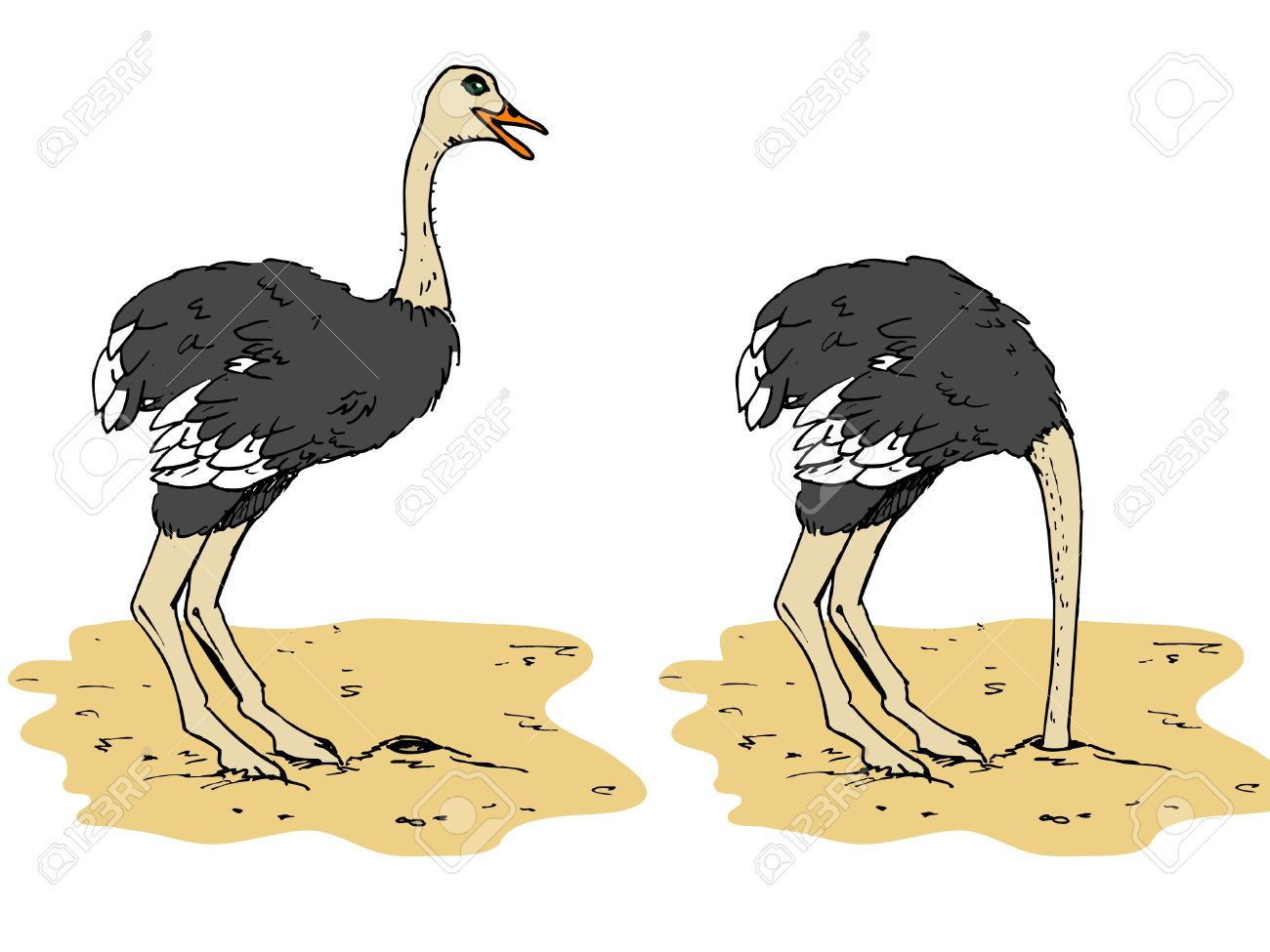 Cartoon ostrich with head below sand. Isolated on white.