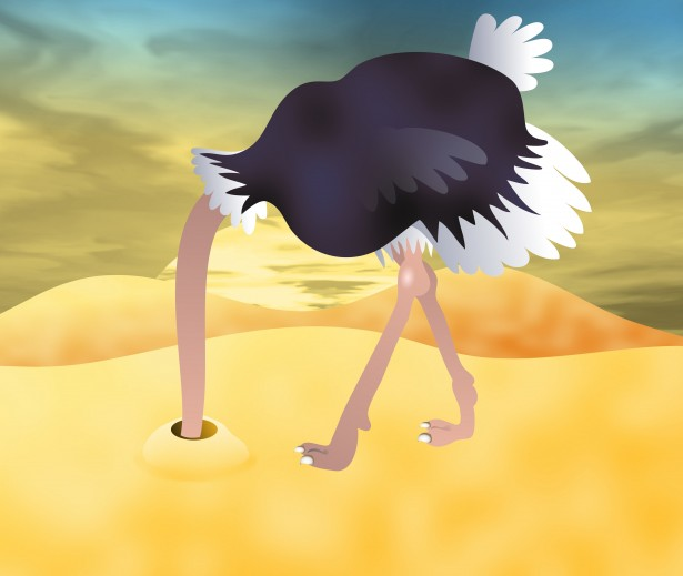 Ostrich Clip Art Free Stock Photo.