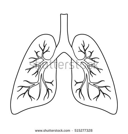 Lung Outline Stock Images, Royalty.