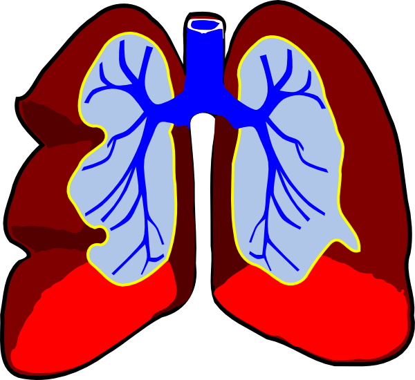 Healthy Lungs Clip Art at Clker.com.