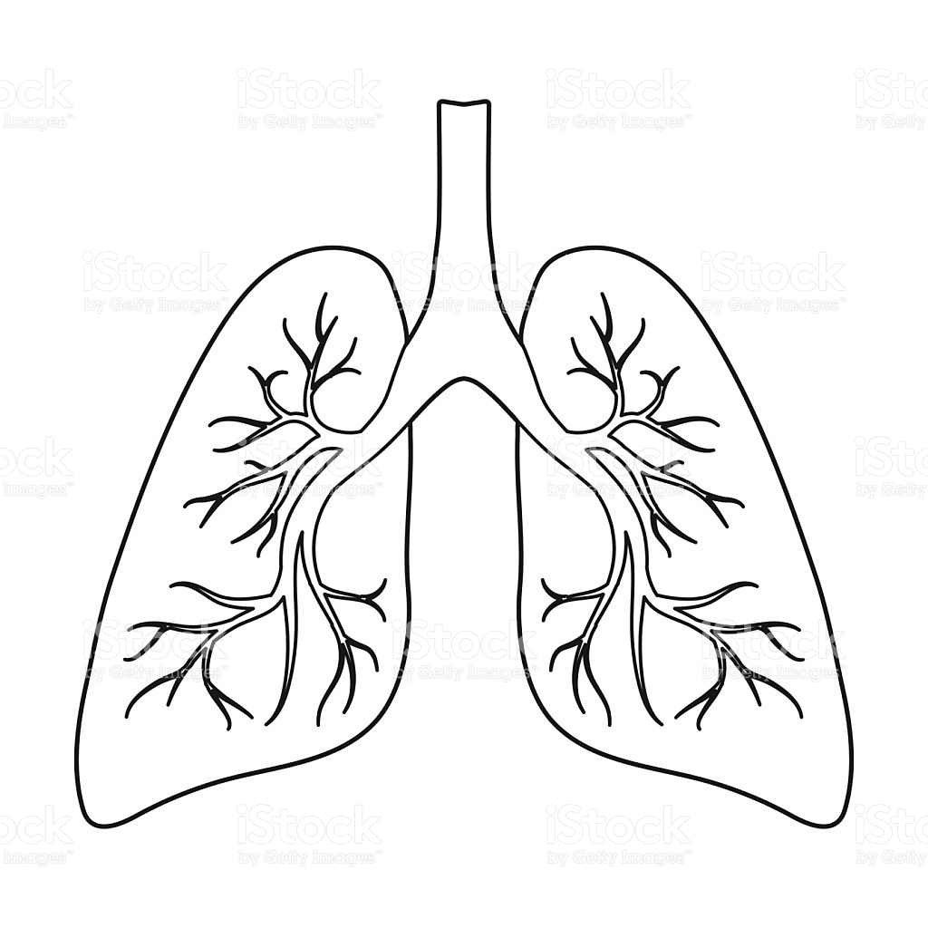 Lungs Icon In Outline Style Isolated On White Background Organs.