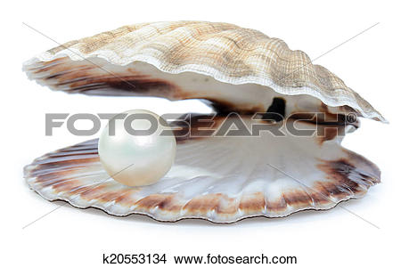 Pearl oyster Illustrations and Clip Art. 135 pearl oyster royalty.