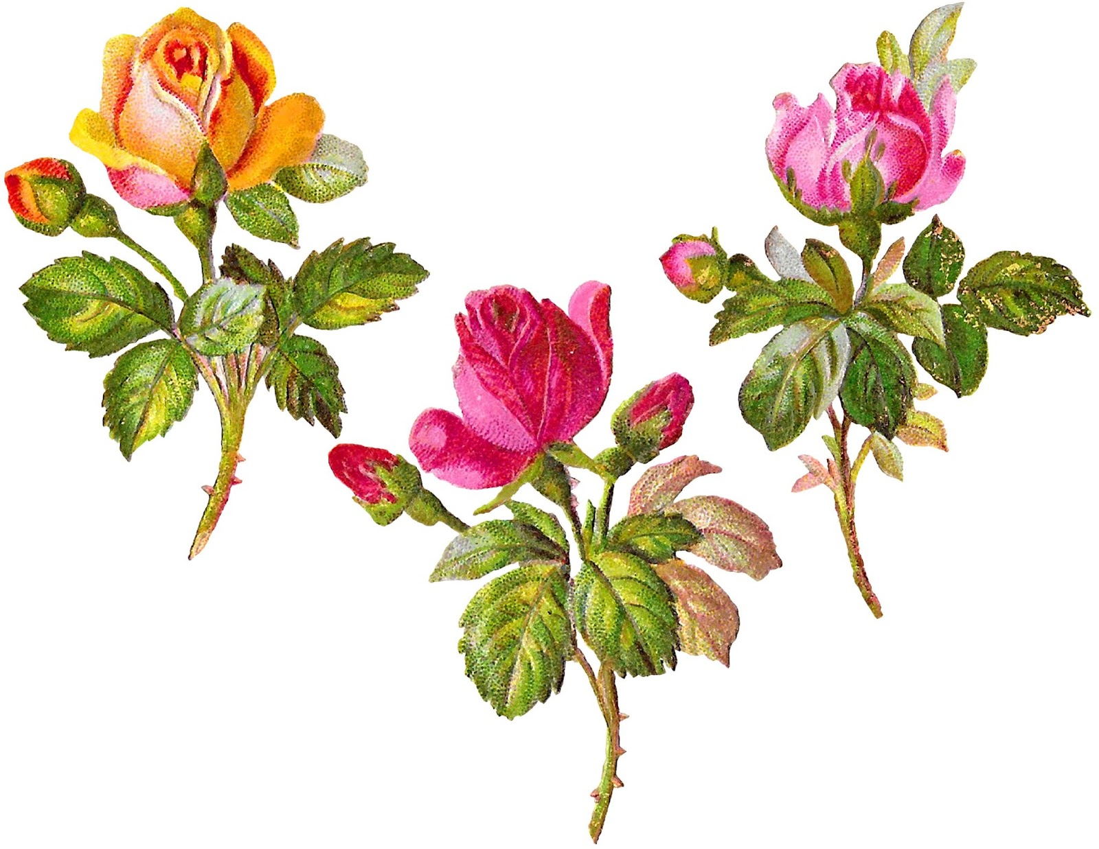 Antique Images: Free Rose Vintage Clipart Digital Package Download.