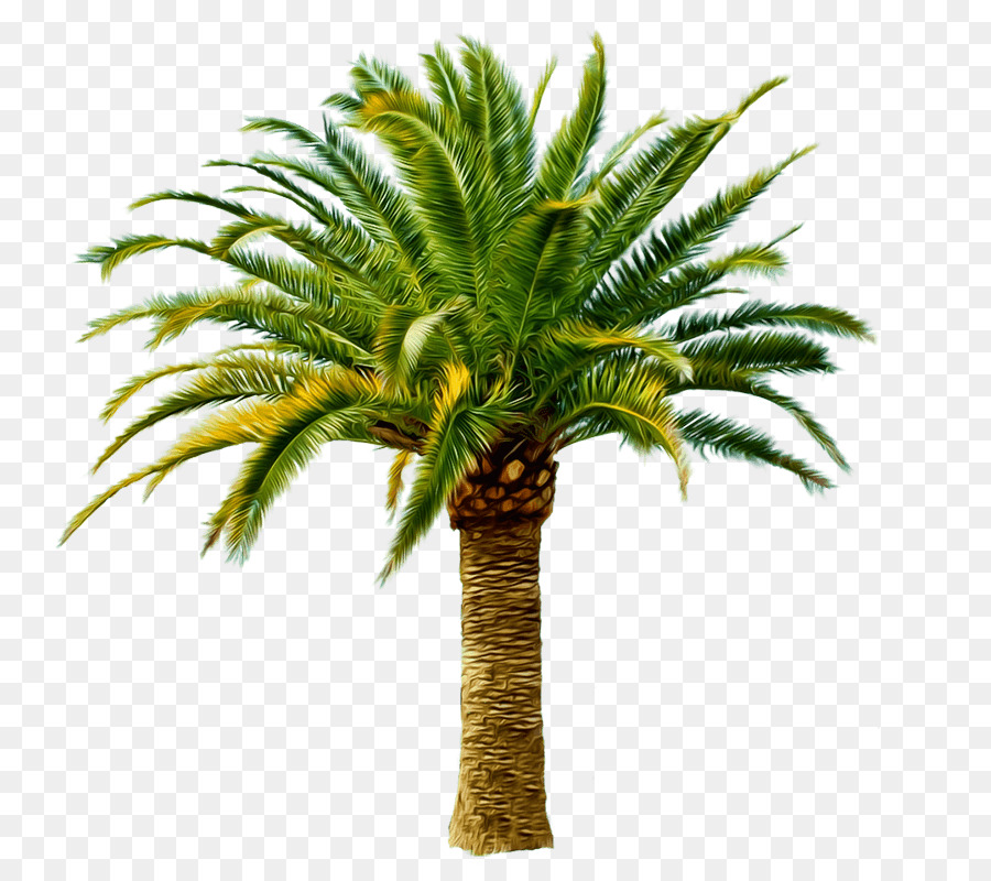 Palm Oil Tree clipart.