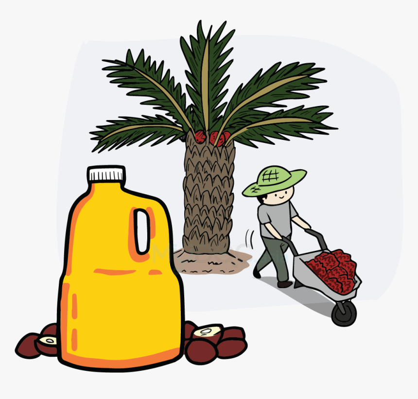 Palm Oil Tree Png Download.