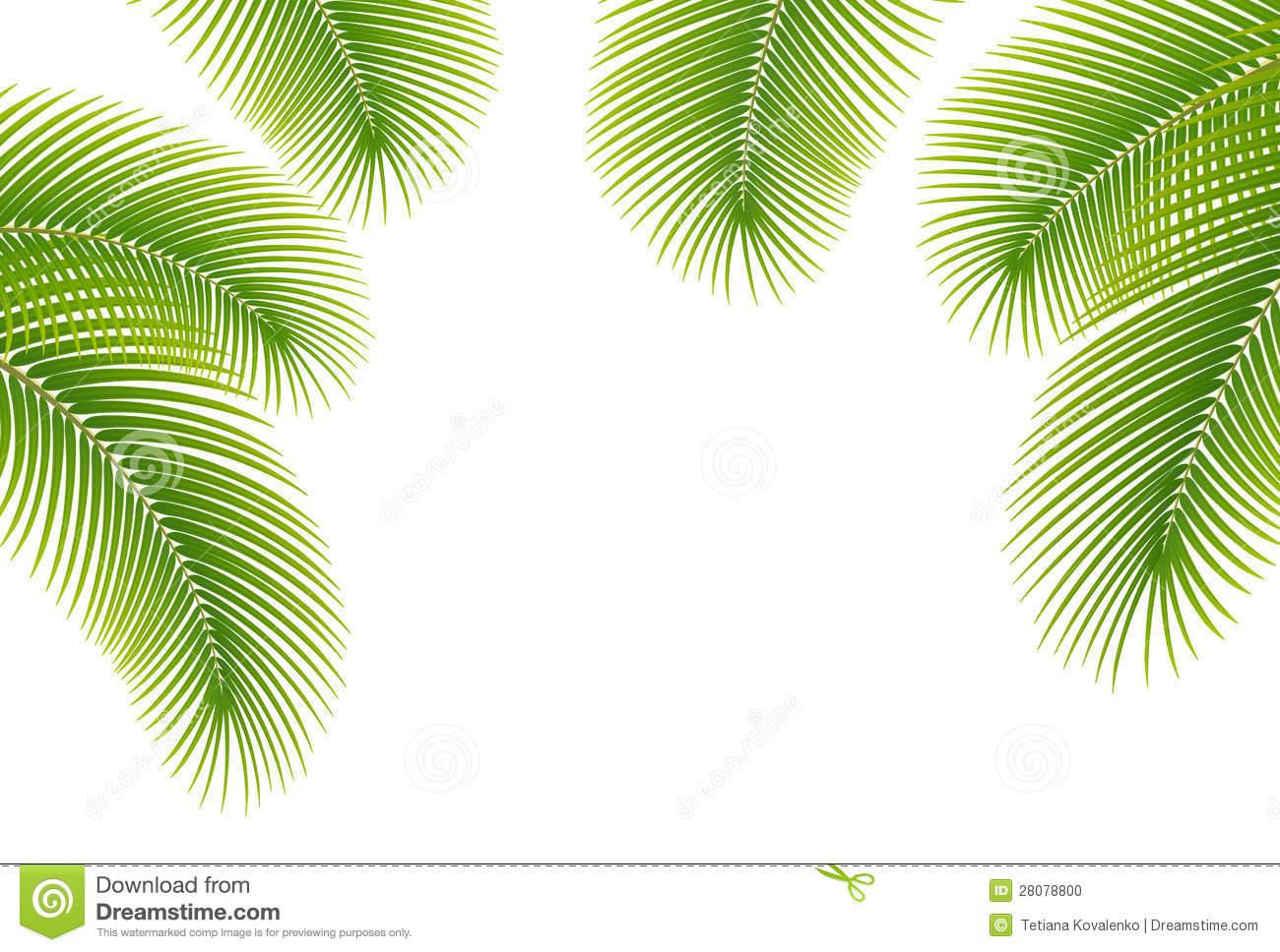 Similiar Palm Boarder Keywords.