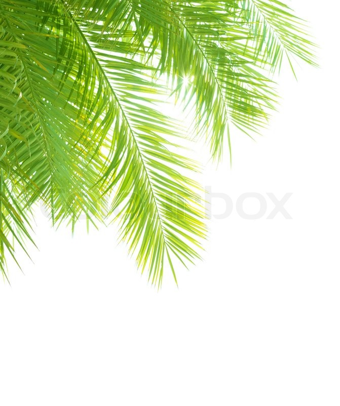 Similiar Palm Border Clip Art Keywords.