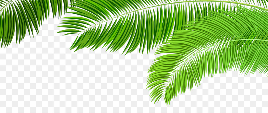 Palm Tree Leaf Vector at GetDrawings.com.