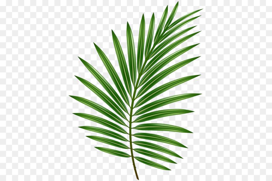 Palm Tree Leaf.