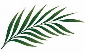 Palm Leaf Outline.